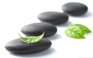 Zen-With-Green-Leaf