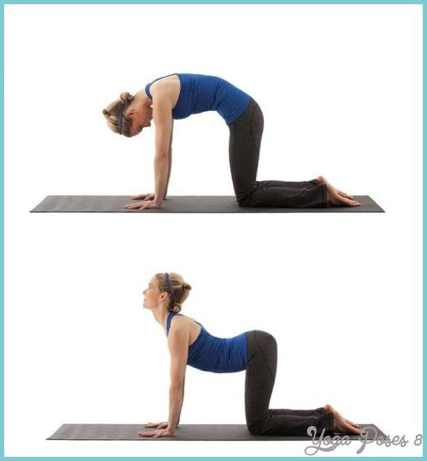 8 Exercises for the Lower Back
